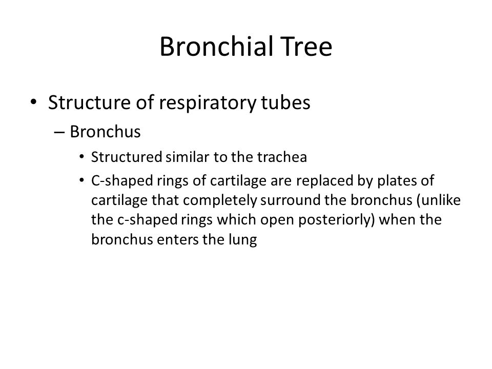 Bronchial Tree Structure of respiratory tubes Bronchus