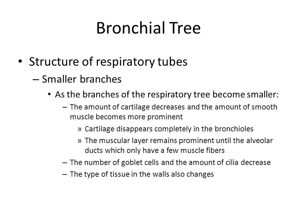 Bronchial Tree Structure of respiratory tubes Smaller branches