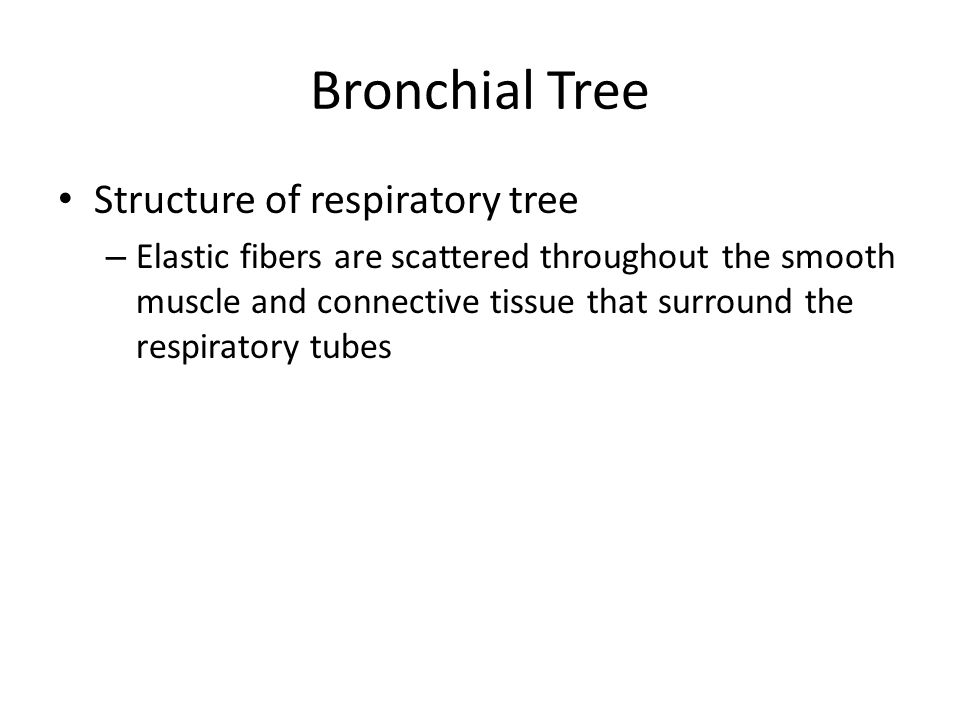 Bronchial Tree Structure of respiratory tree