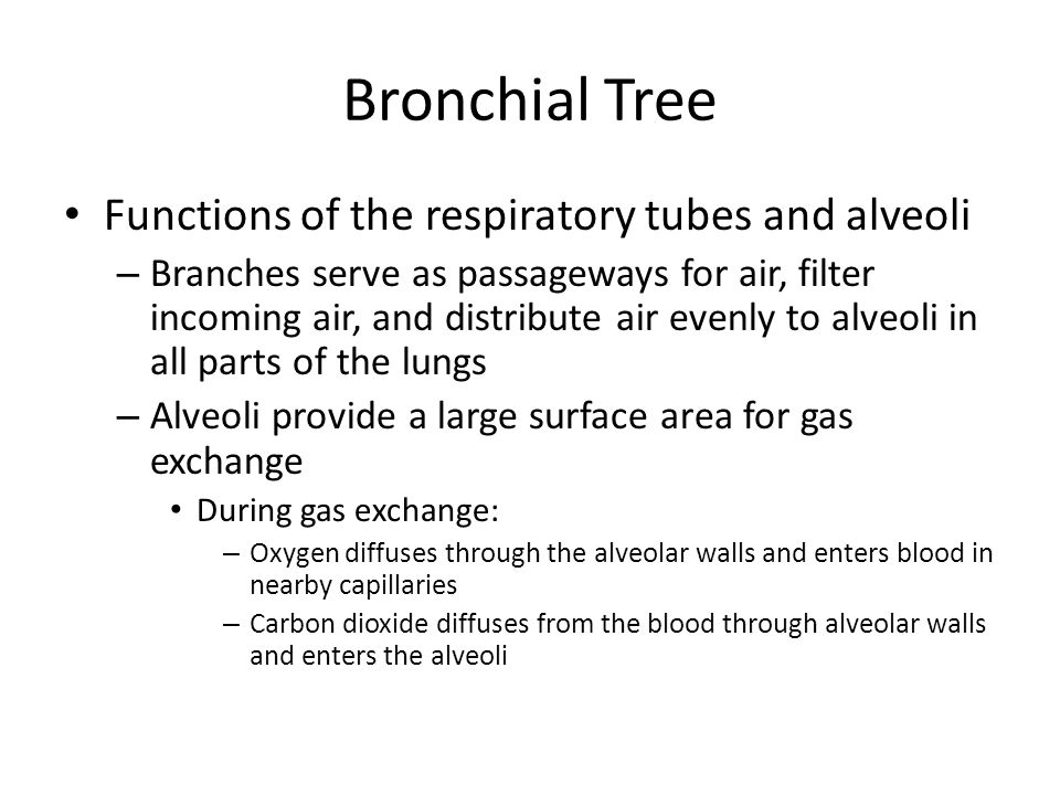 Bronchial Tree Functions of the respiratory tubes and alveoli