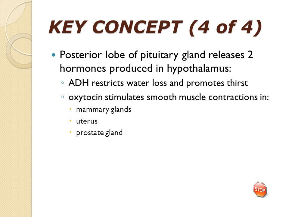 KEY CONCEPT (4 of 4) Posterior lobe of pituitary gland releases 2 hormones produced in hypothalamus: