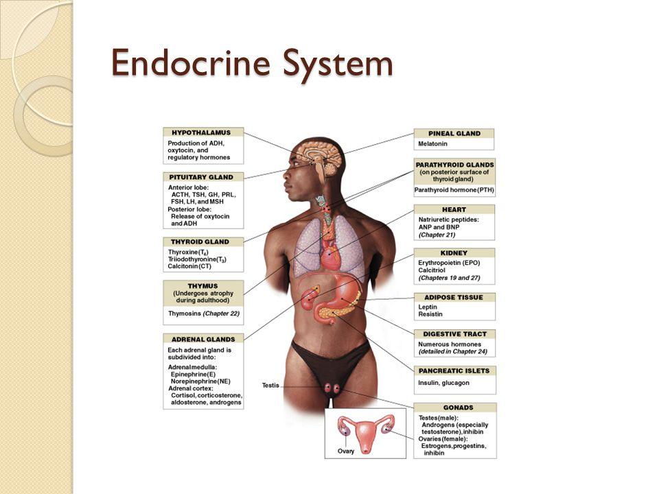 Endocrine System Figure 18–1