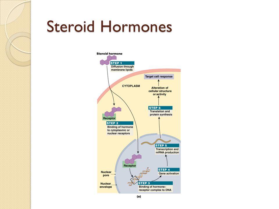 Steroid Hormones Figure 18–4a