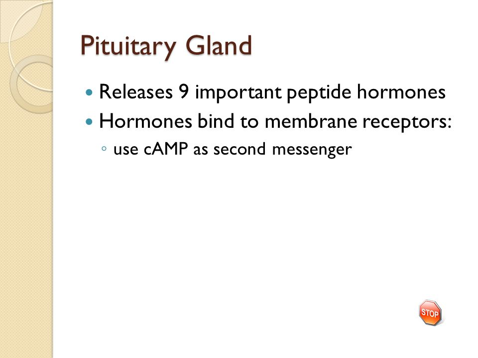 Pituitary Gland Releases 9 important peptide hormones