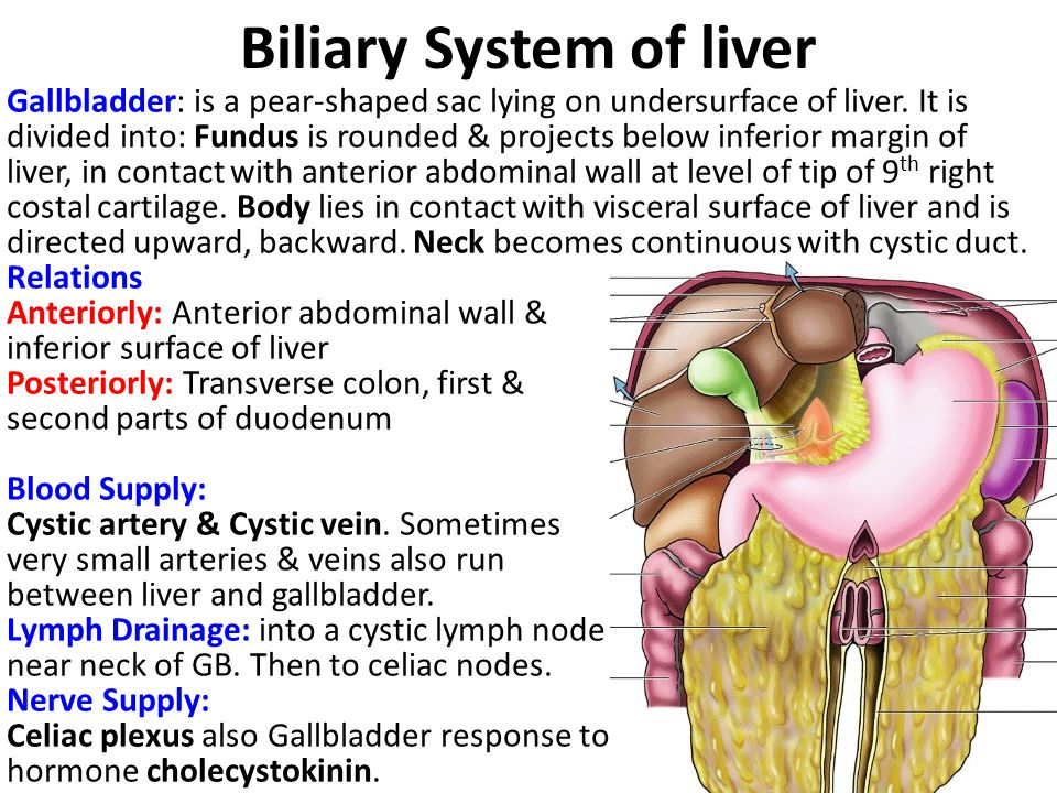 Biliary System of liver