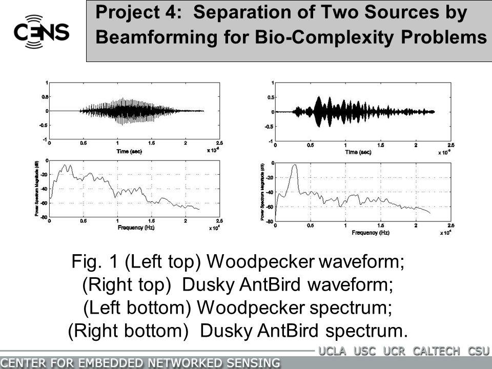 Fig. 1 (Left top) Woodpecker waveform;
