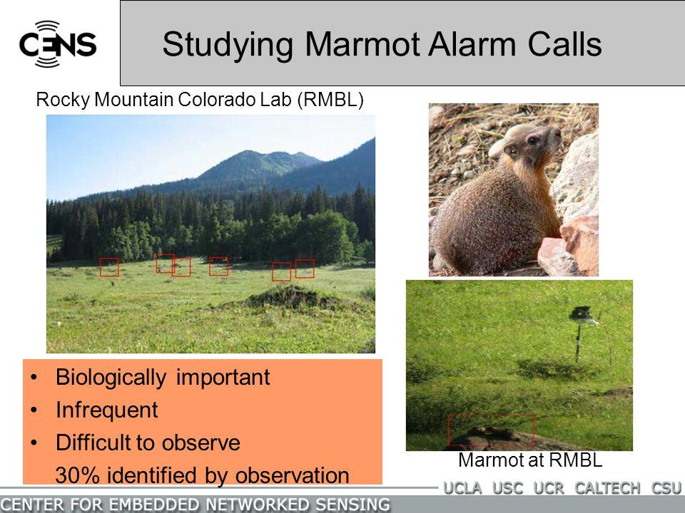 Studying Marmot Alarm Calls