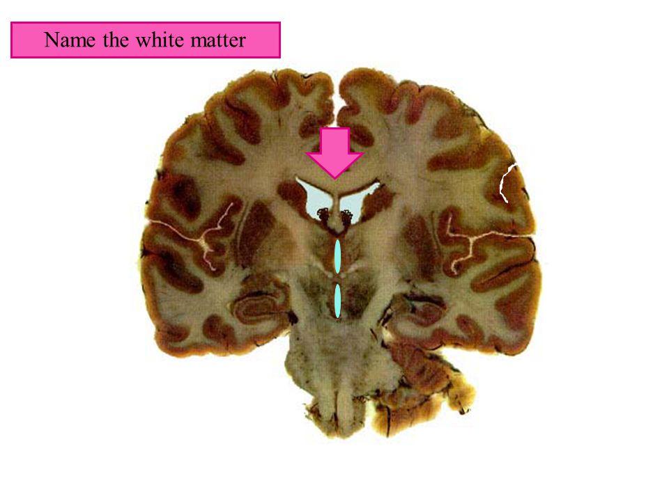 Name the white matter