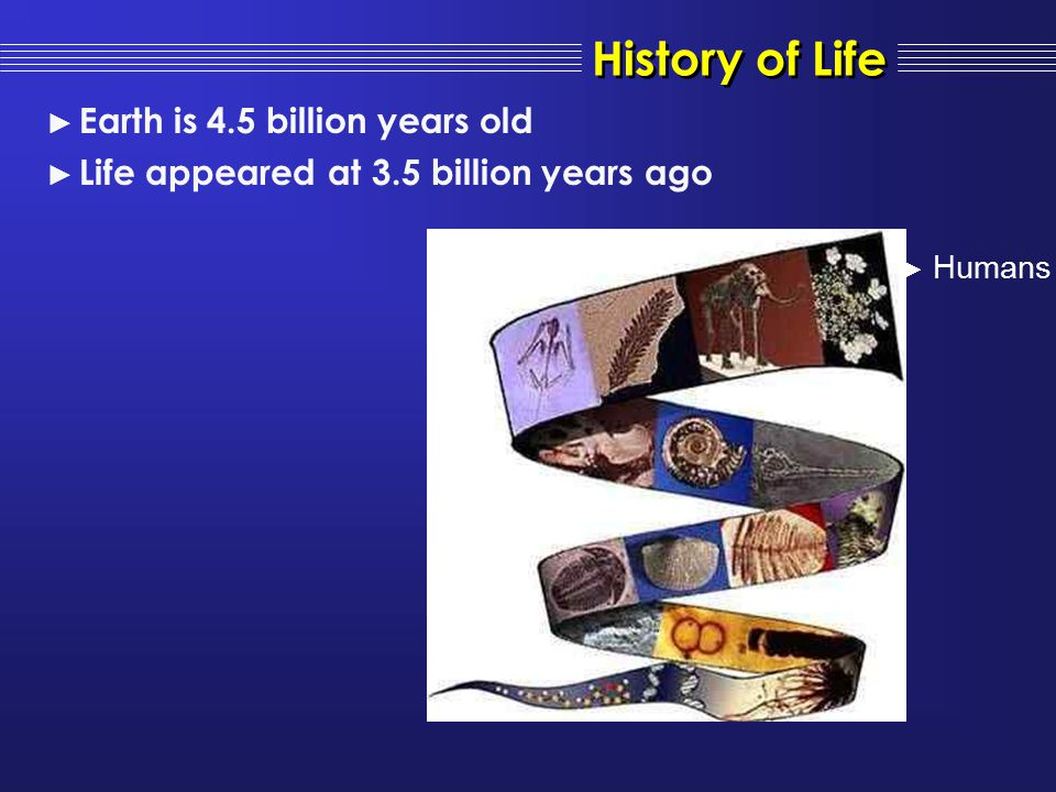 History of Life Earth is 4.5 billion years old