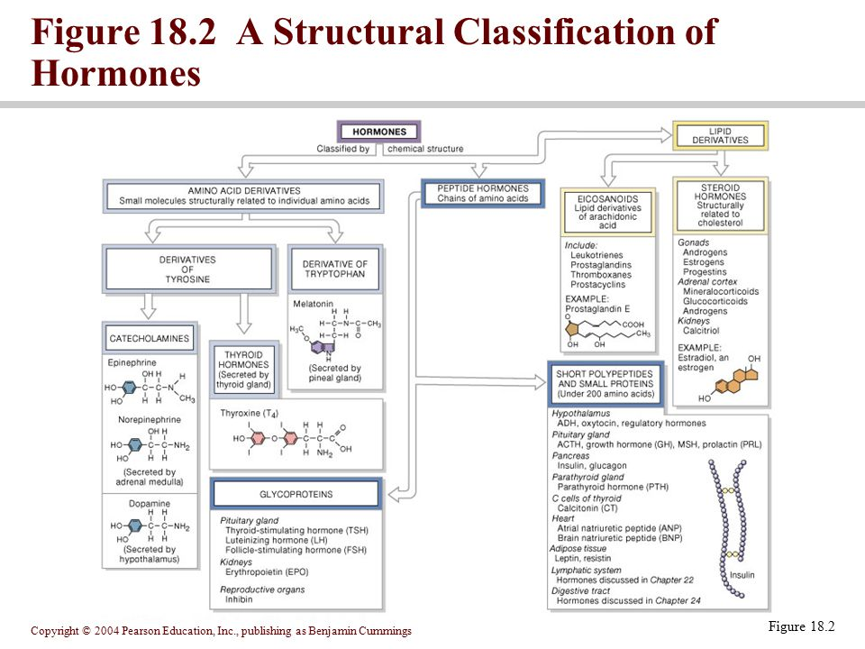 Figure 18.2 A Structural Classification of Hormones
