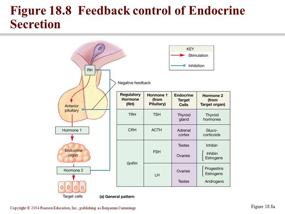 Figure 18.8 Feedback control of Endocrine Secretion