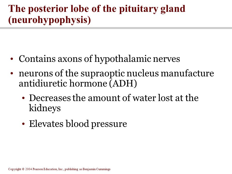 The posterior lobe of the pituitary gland (neurohypophysis)