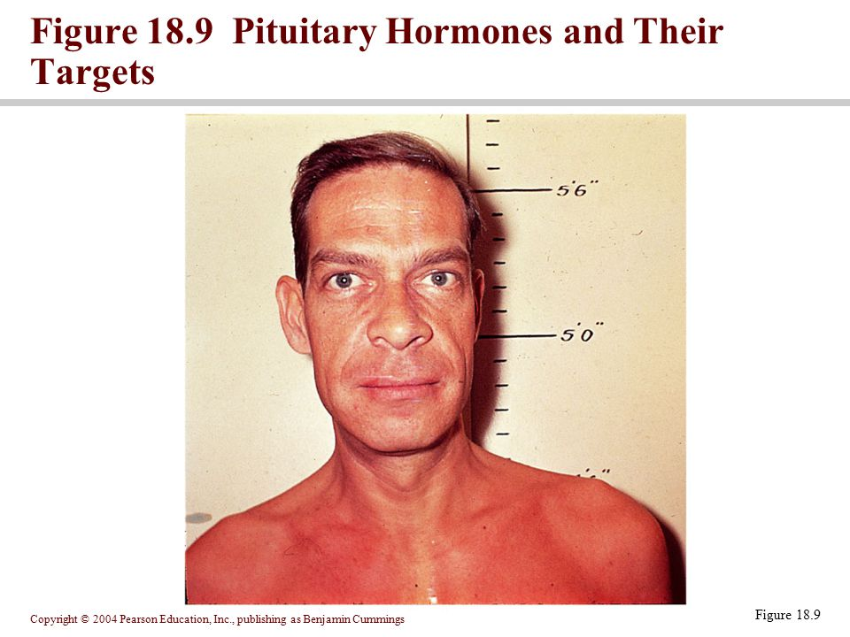 Figure 18.9 Pituitary Hormones and Their Targets