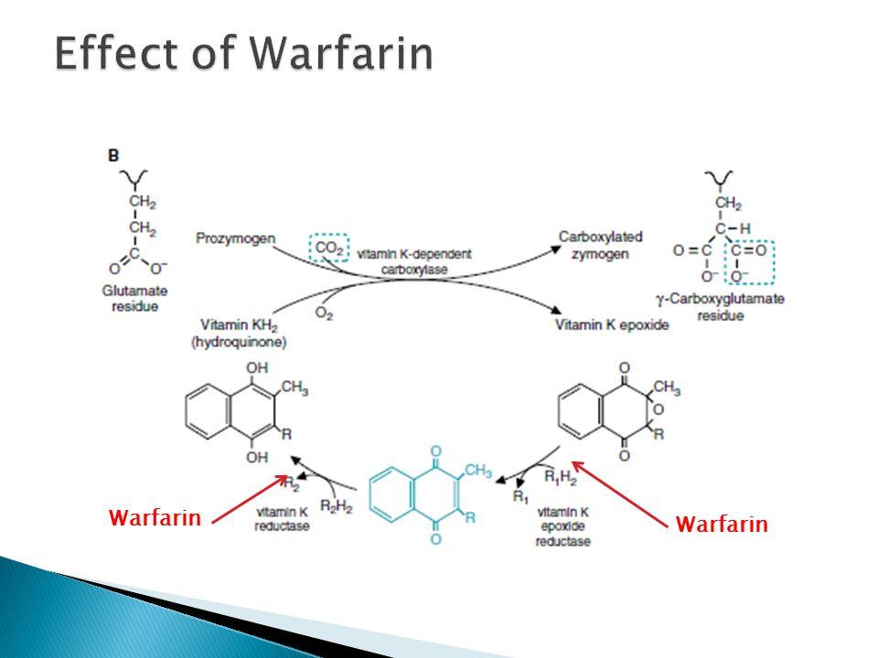 Effect of Warfarin Warfarin Warfarin