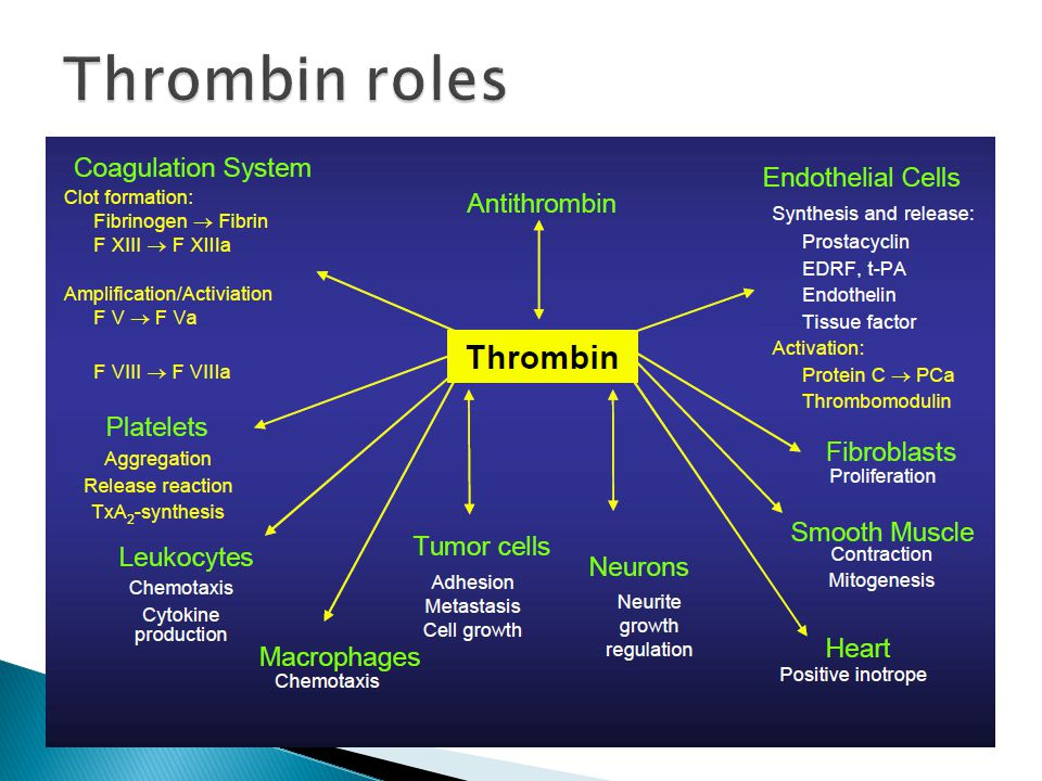 Thrombin roles