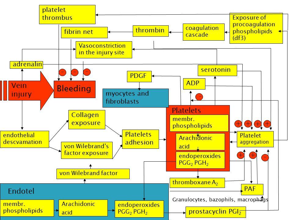 Bleeding acid acid - - - + + + Vein injury + - + + Endotel
