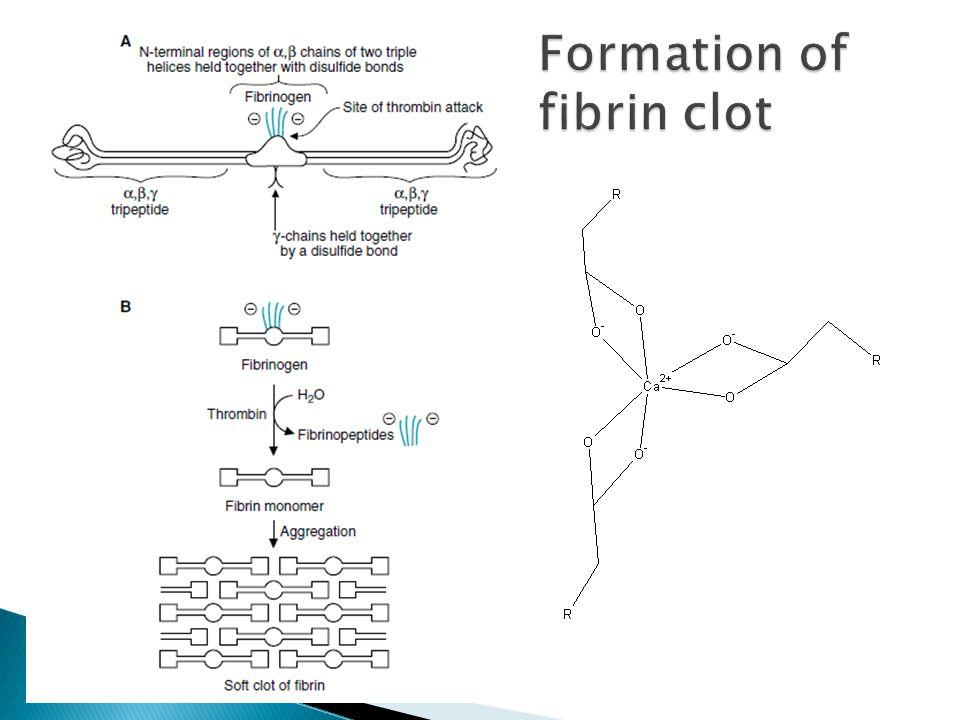 Formation of fibrin clot