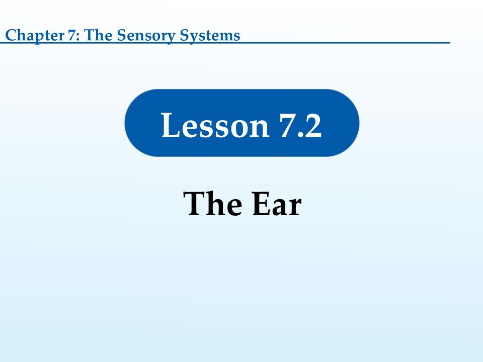 Chapter 7: The Sensory Systems