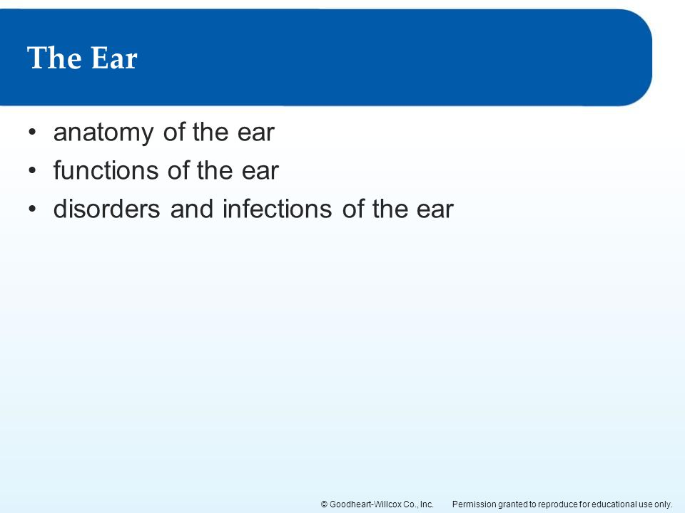 The Ear anatomy of the ear functions of the ear