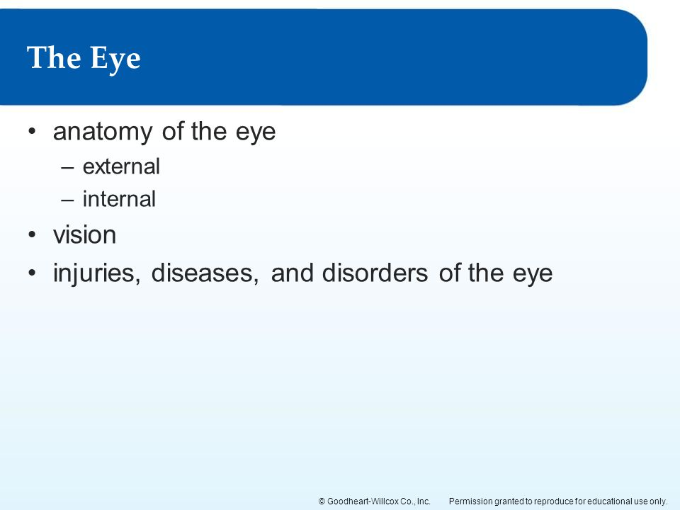The Eye anatomy of the eye vision