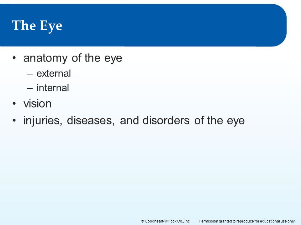The Eye anatomy of the eye vision