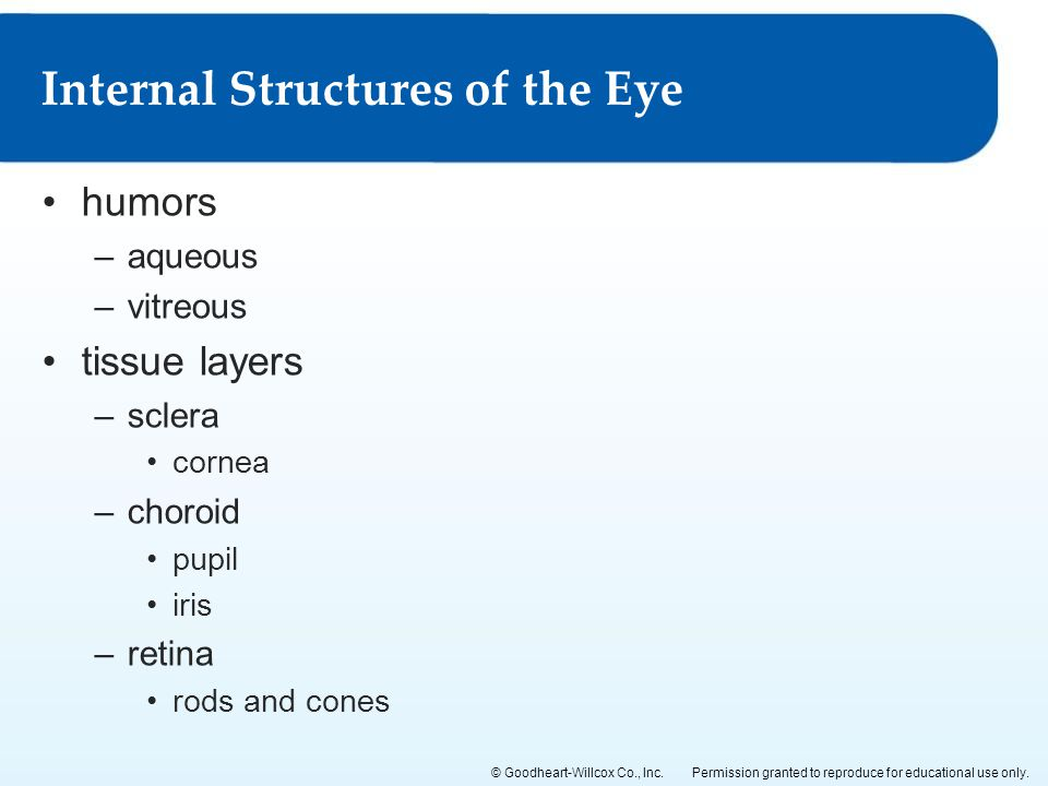 Internal Structures of the Eye