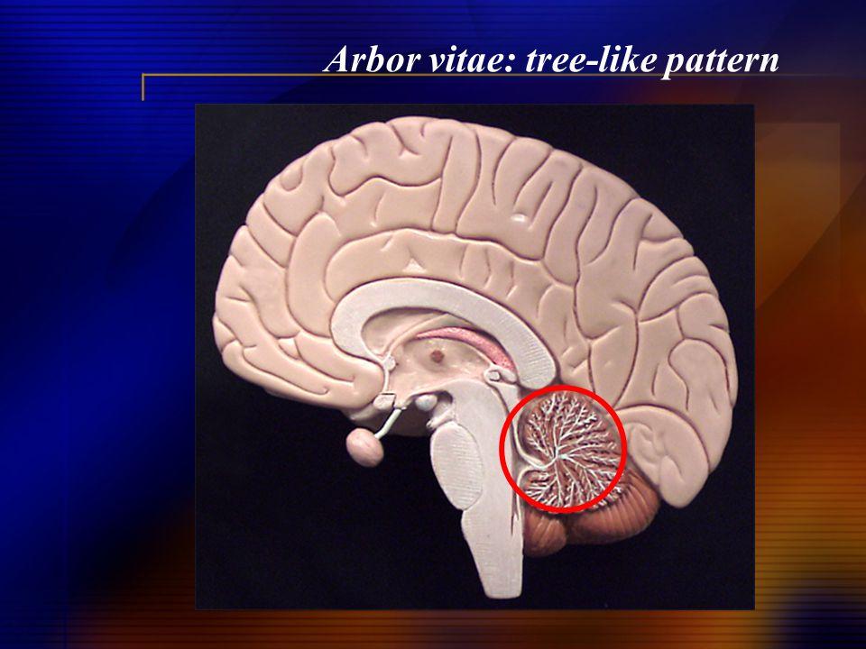 Arbor vitae: tree-like pattern