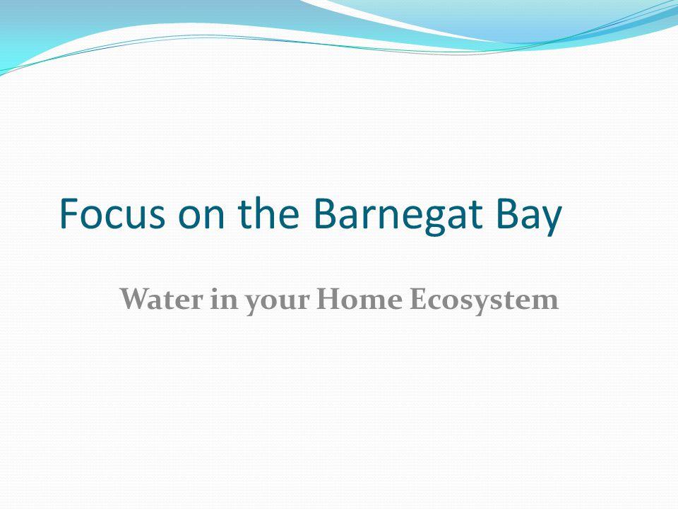 Focus on the Barnegat Bay