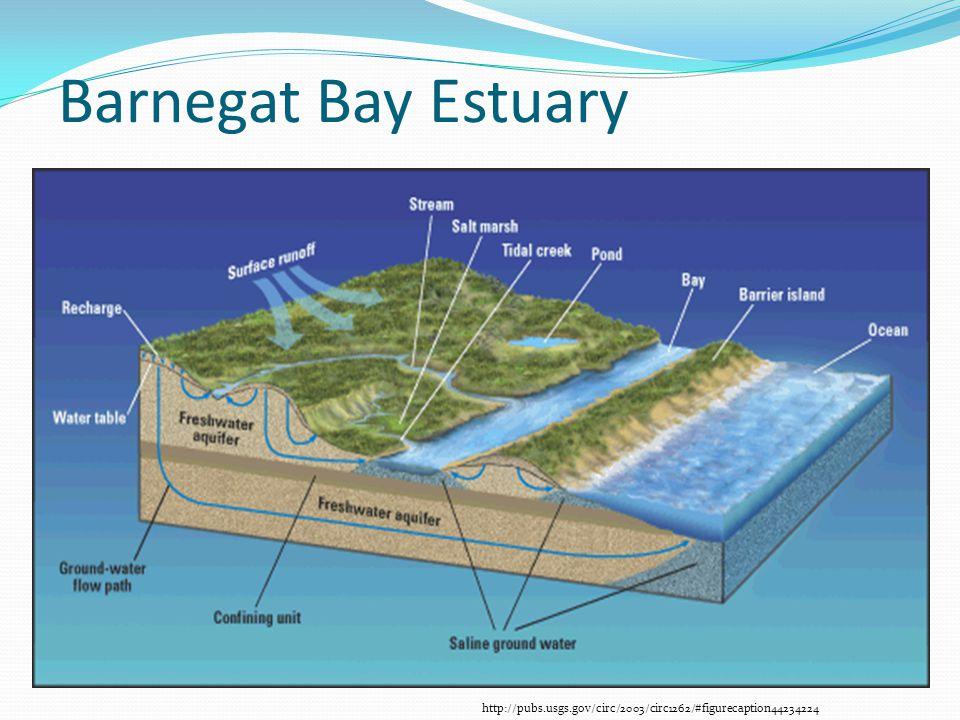 Barnegat Bay Estuary