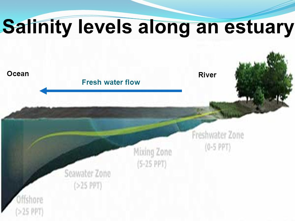 Salinity levels along an estuary