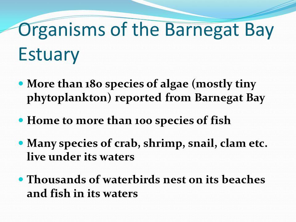 Organisms of the Barnegat Bay Estuary