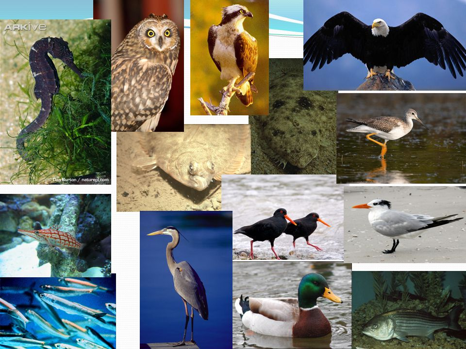 Some of the animals that are associated with brackish habitats include