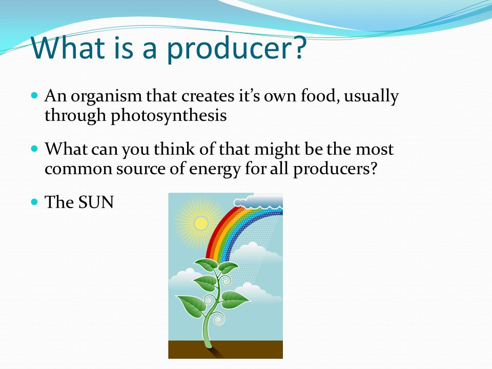 What is a producer An organism that creates it's own food, usually through photosynthesis.