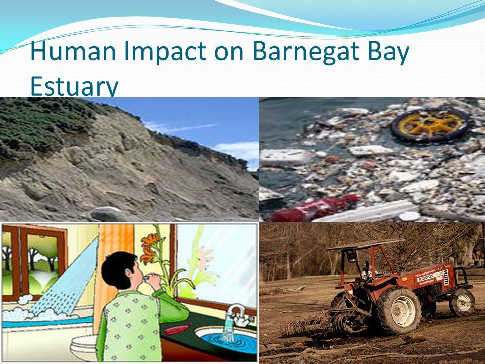 Human Impact on Barnegat Bay Estuary