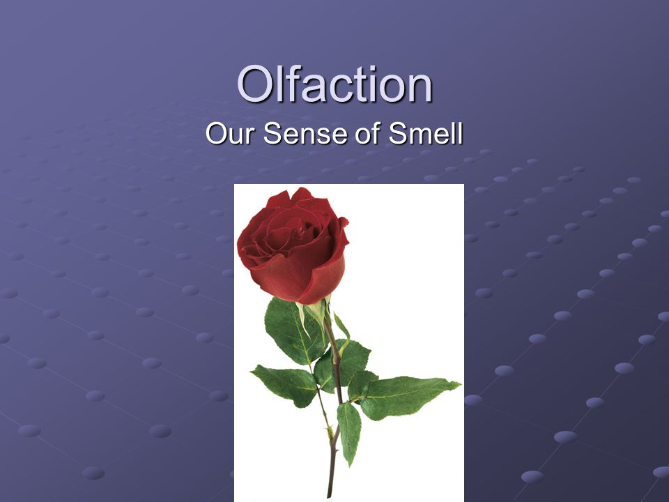 Olfaction Our Sense of Smell