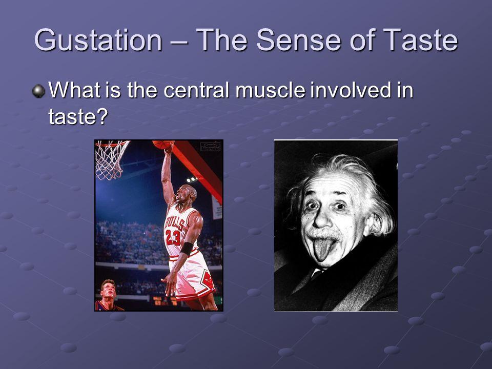 Gustation – The Sense of Taste