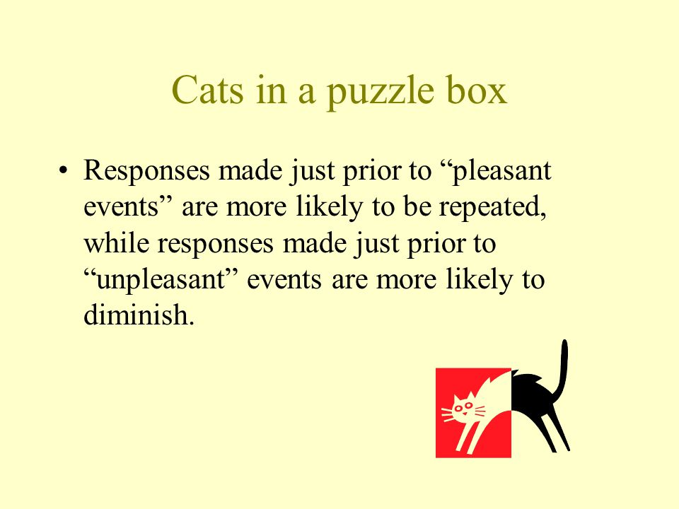 Cats in a puzzle box