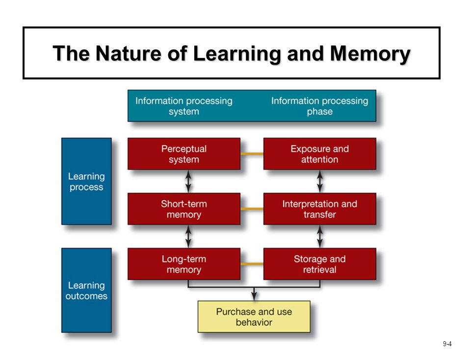 The Nature of Learning and Memory
