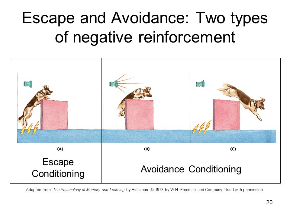 Escape and Avoidance: Two types of negative reinforcement