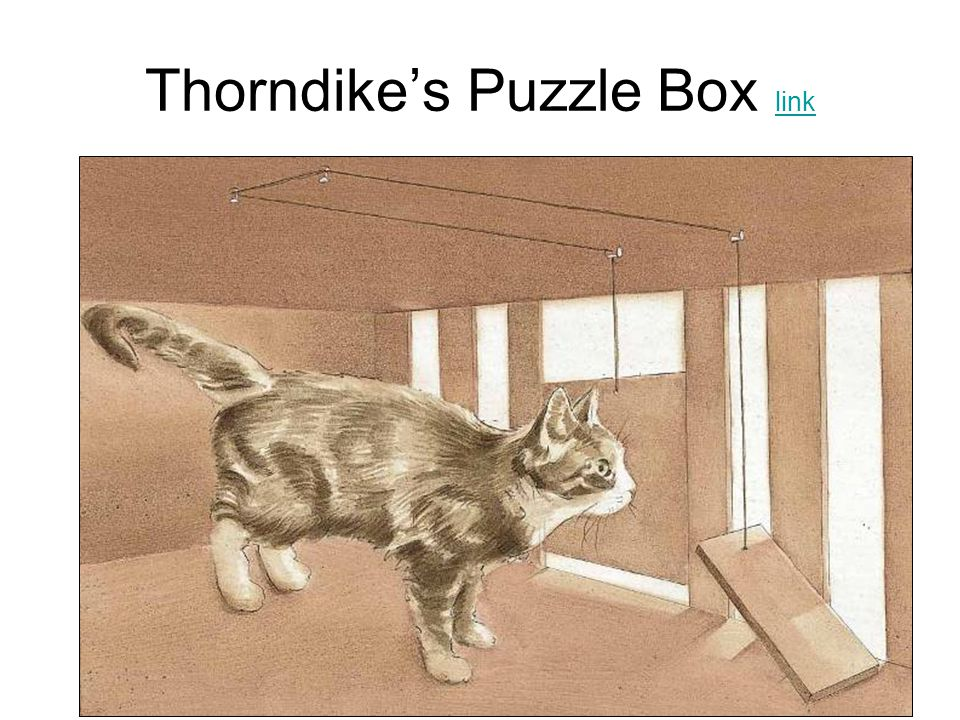 Thorndike's Puzzle Box link