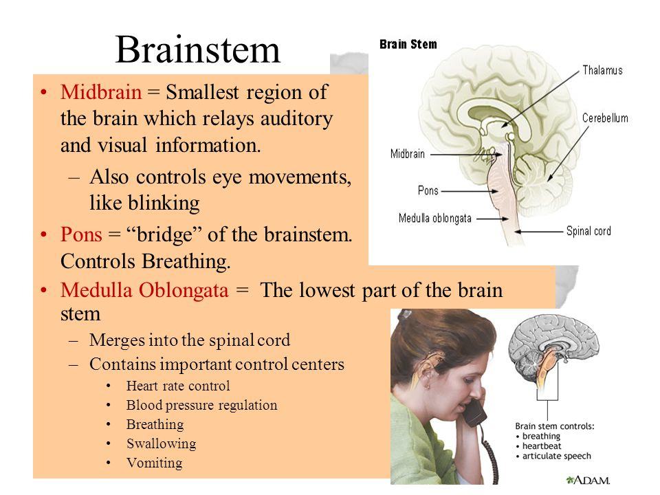 Brainstem Midbrain = Smallest region of the brain which relays auditory and visual information. Also controls eye movements, like blinking.