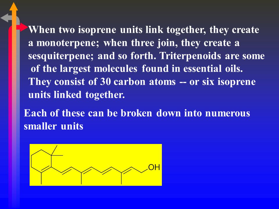 When two isoprene units link together, they create
