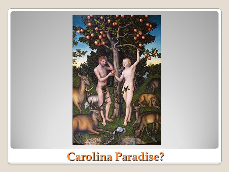 Carolina Paradise