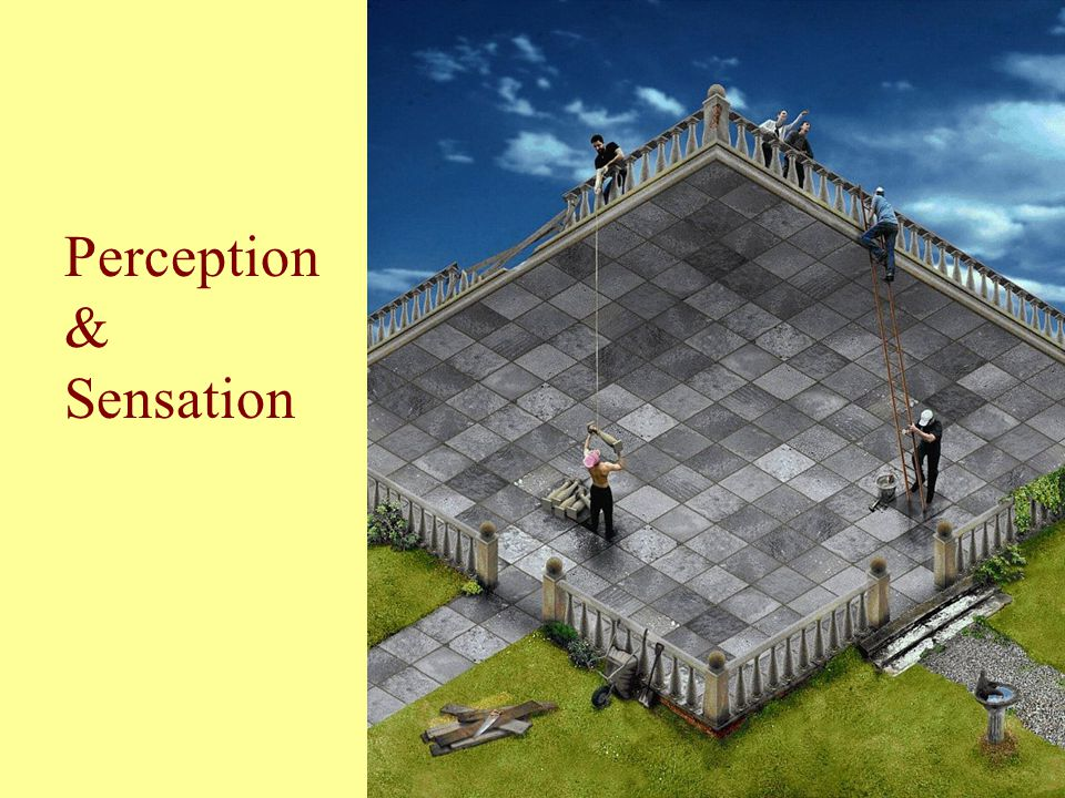 Perception & Sensation