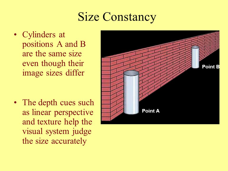 Size Constancy Cylinders at positions A and B are the same size even though their image sizes differ.