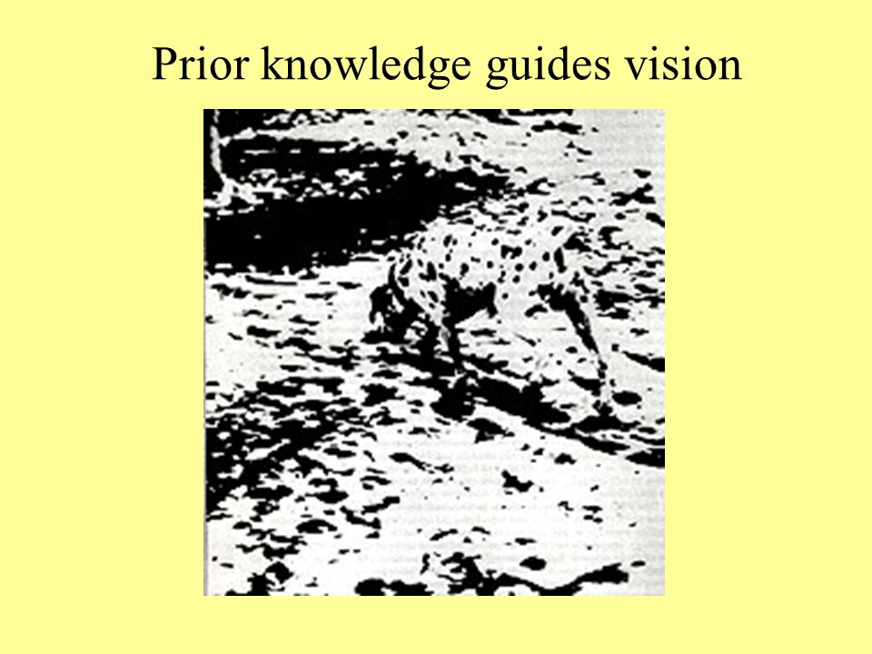Prior knowledge guides vision