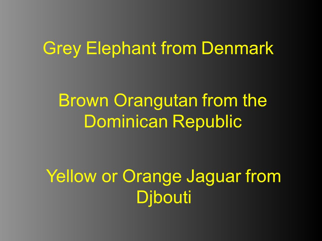 Grey Elephant from Denmark