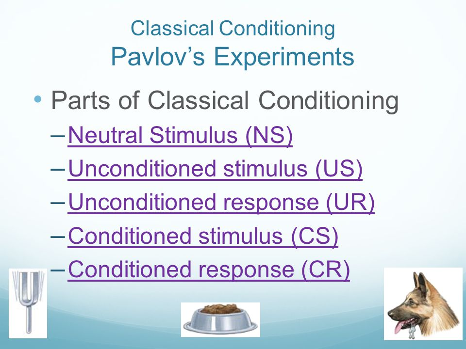 Classical Conditioning Pavlov's Experiments
