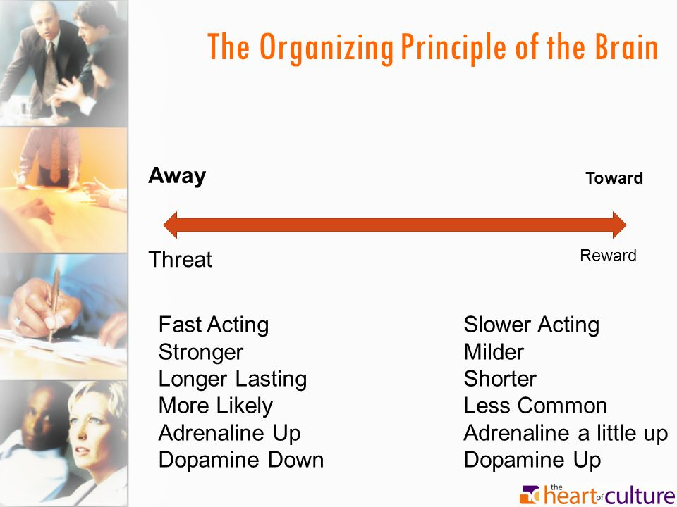 The Organizing Principle of the Brain