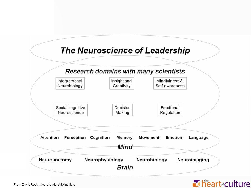 David From David Rock, Neuroleadership Institute